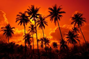 Sunset on Tropical Landscape Thailand