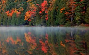 Autumn Forest, Fog, Lake