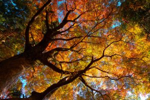 Autumn Trees Orange Yellow Green