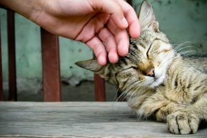 Cat Being Stroked