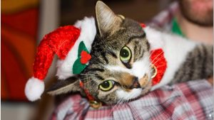 Gray Tabby Cat On Top of Red Textile – Christmas