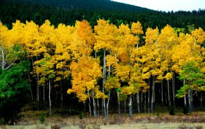 Luminous Yellow & Green Trees