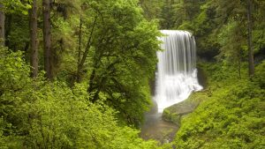 Spring, North Middle Falls, Silver Falls State Park, Oregon