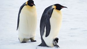 Penguin Polar Animals