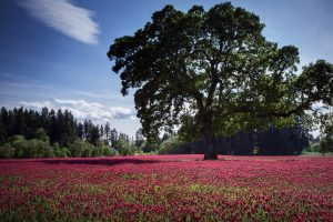 Red Flowers and Tree