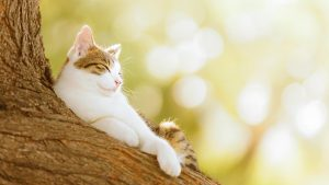 Sleeping Cat On The Tree