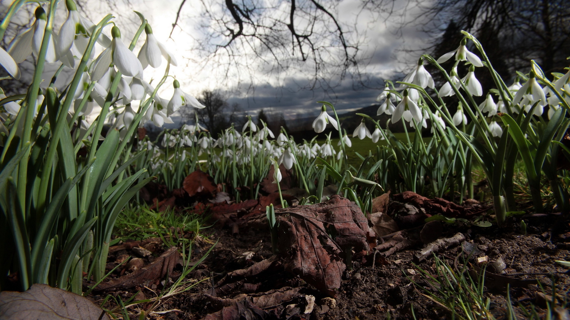 Spring, Snowdrops, Flowers, Nature Wallpaper 1920x1080 px