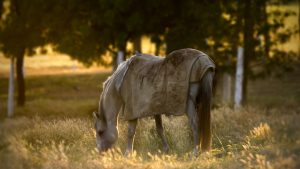 Horse Animal Filed Grass Alone Sunset
