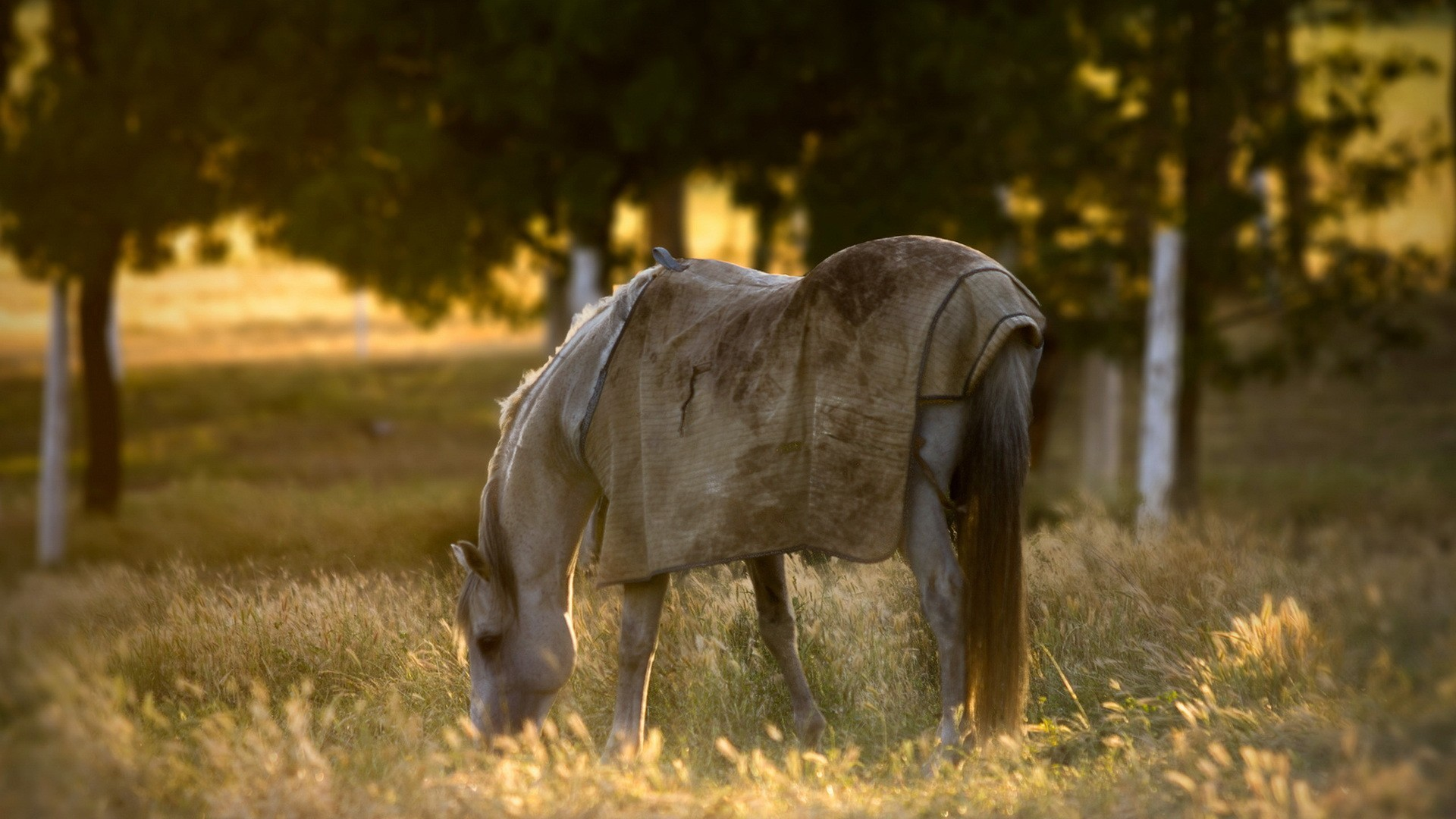 Horse Animal Filed Grass Alone Sunset Wallpaper 1920x1080 px