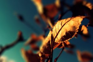 Dried Leaves Photography