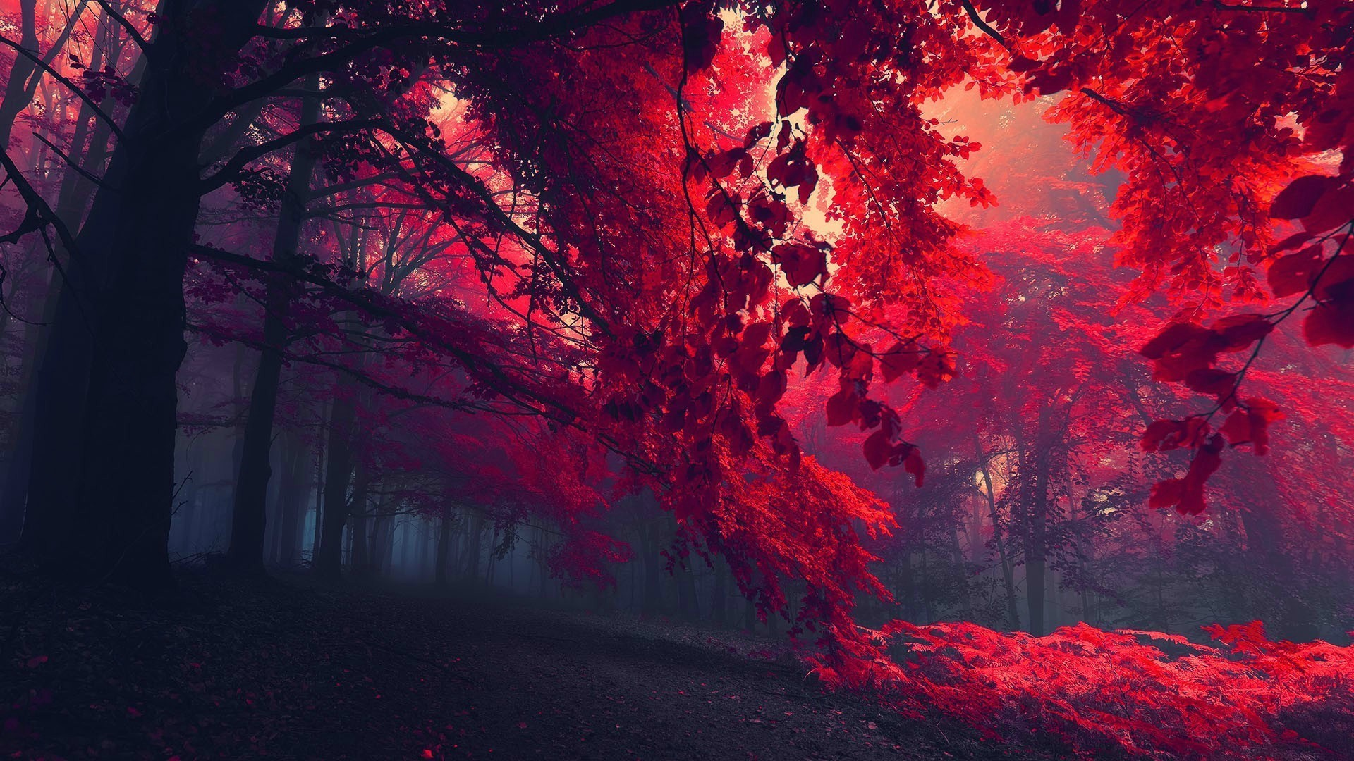 Autumn Red Forest Wallpaper 1920x1080 px